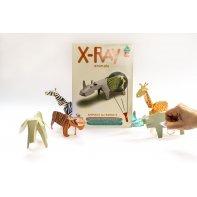 Koa Koa Animaux Rayons X